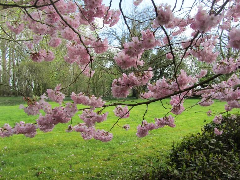arbre rose 02