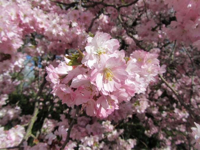 arbre rose 03