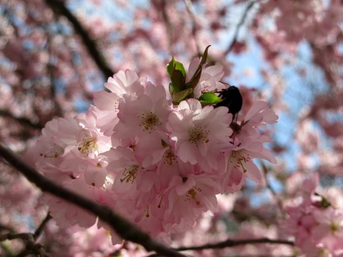 arbre rose 04