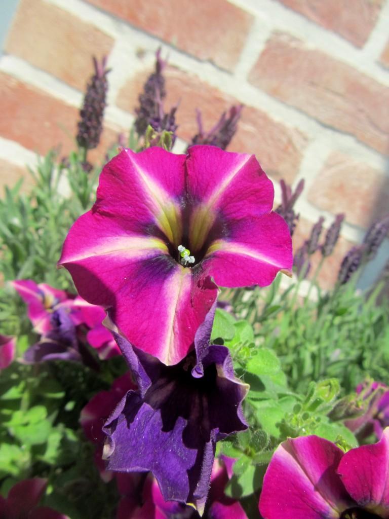 fleur m 2