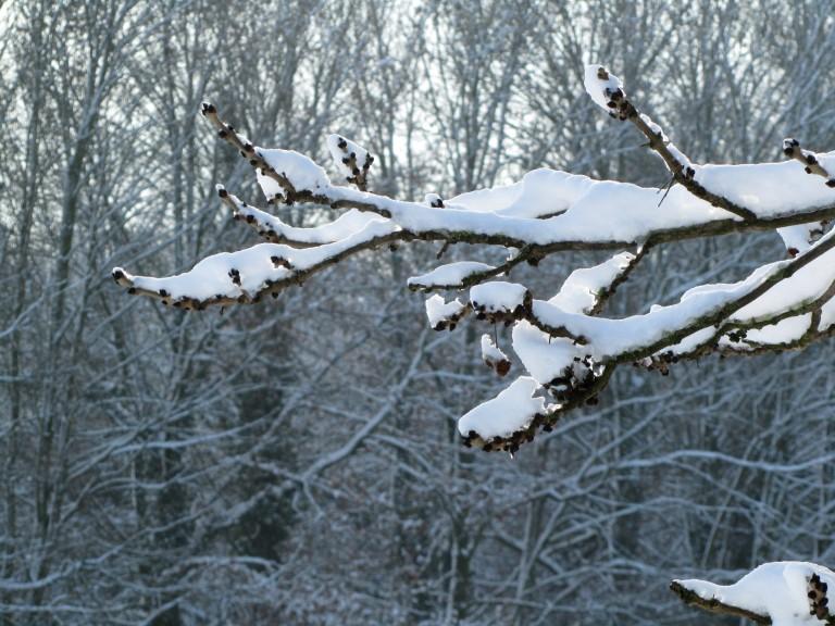 neige-20-12-10-030